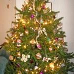 tree 2007 - 2