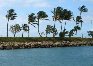 812680_windy_palms