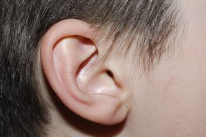 image of ear
