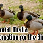 is social media automation for the birds
